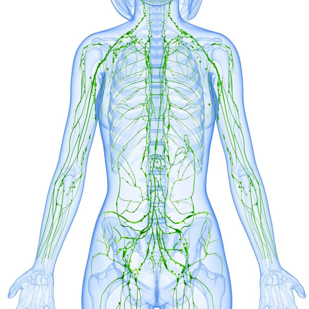 Периферические лимфоузлы в теле человека