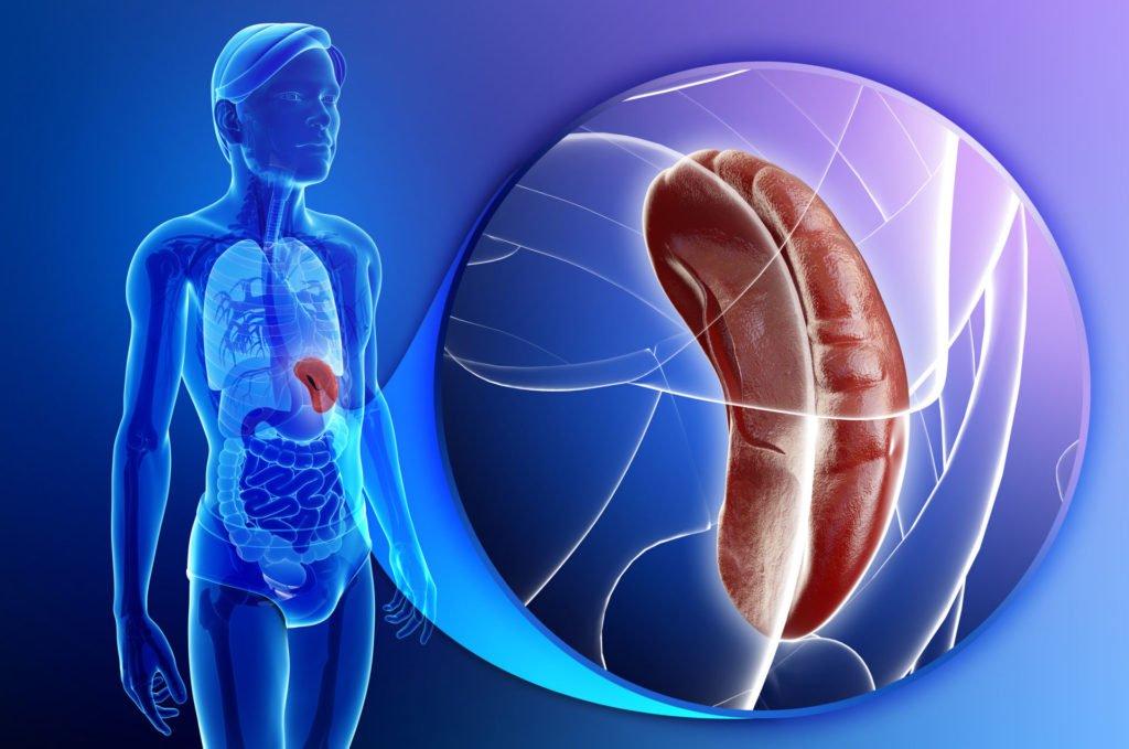 Симптоматика лимфомы маргинальной зоны селезенки