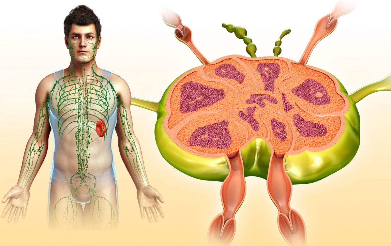 Лимфаденопатия – лечение, шейная и подмышечная лимфаденопатия
