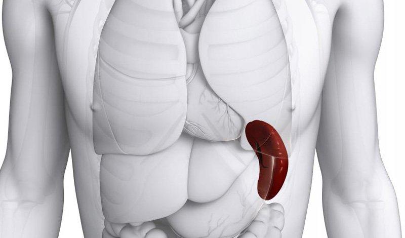 Можно ли жить без селезенки: последствия удаления органа