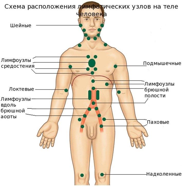 Лимфатические узлы на теле человека