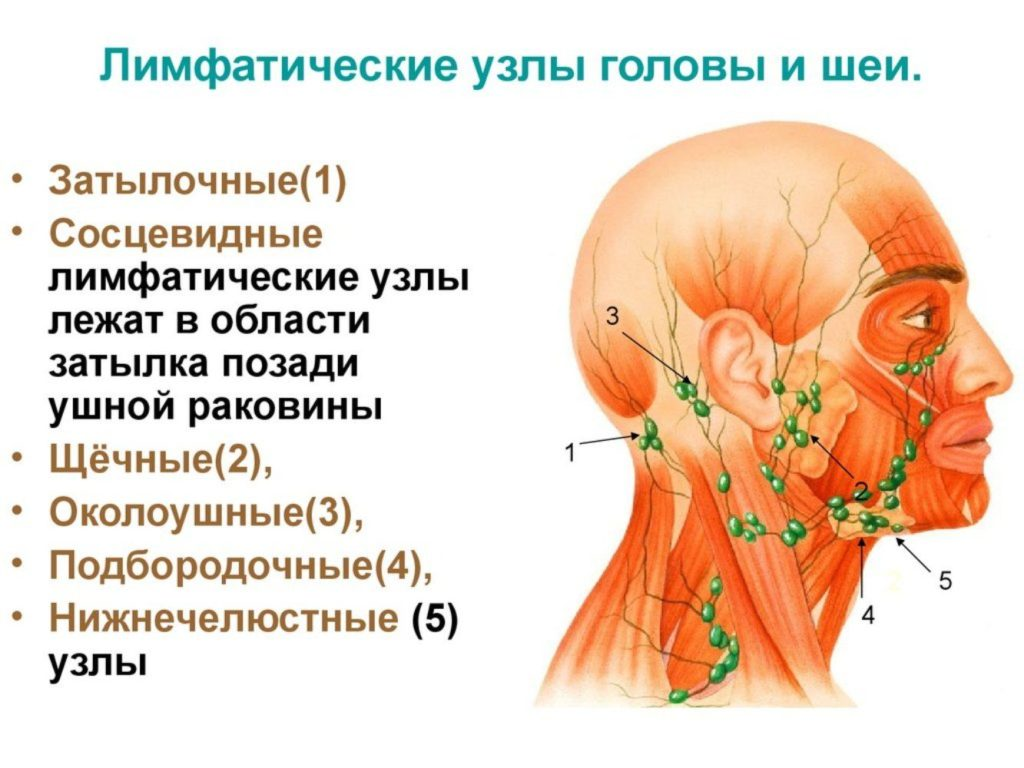 Лимфоузлы на лице