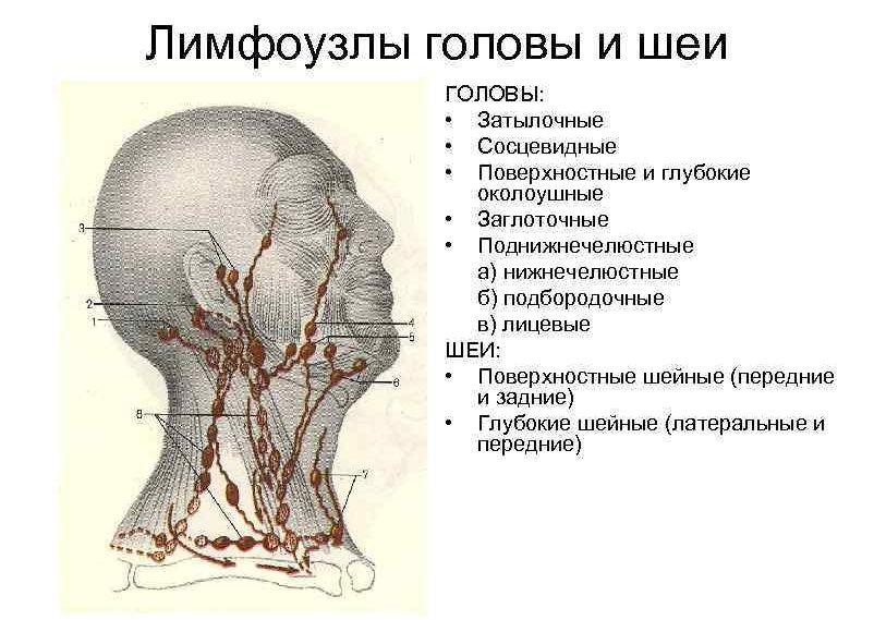Лимфоузлы на голове