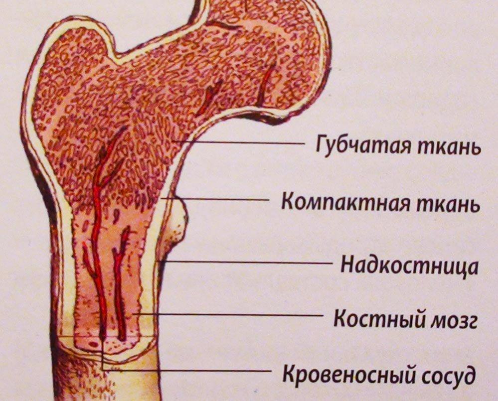 Что такое аплазия костного мозга