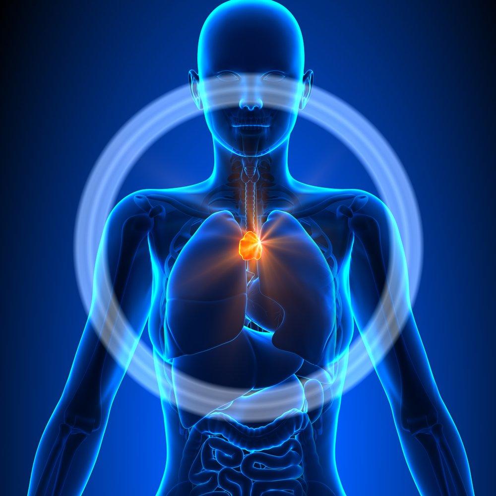 Гормоны тимуса: разновидности, функции, симптомы отклонений