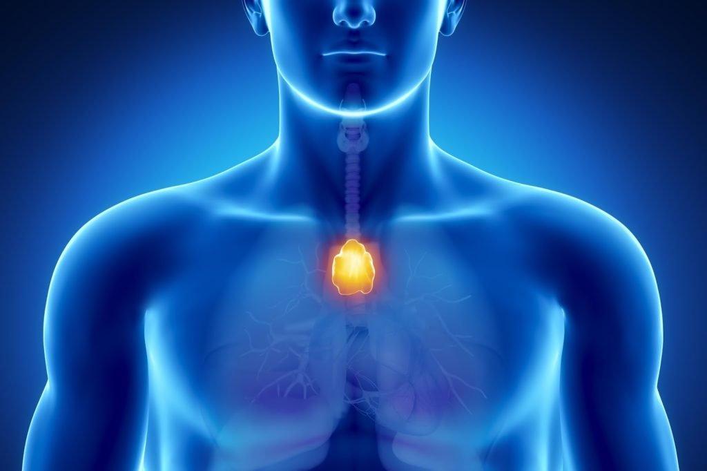 Гиперплазия вилочковой железы: симптомы, причины и потенциальные осложнения
