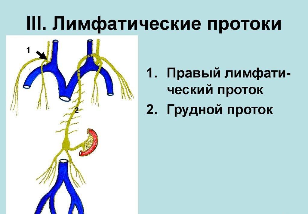 Грудной лимфатический проток