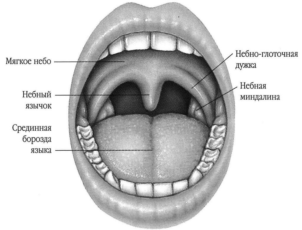 Расположение небного язычка