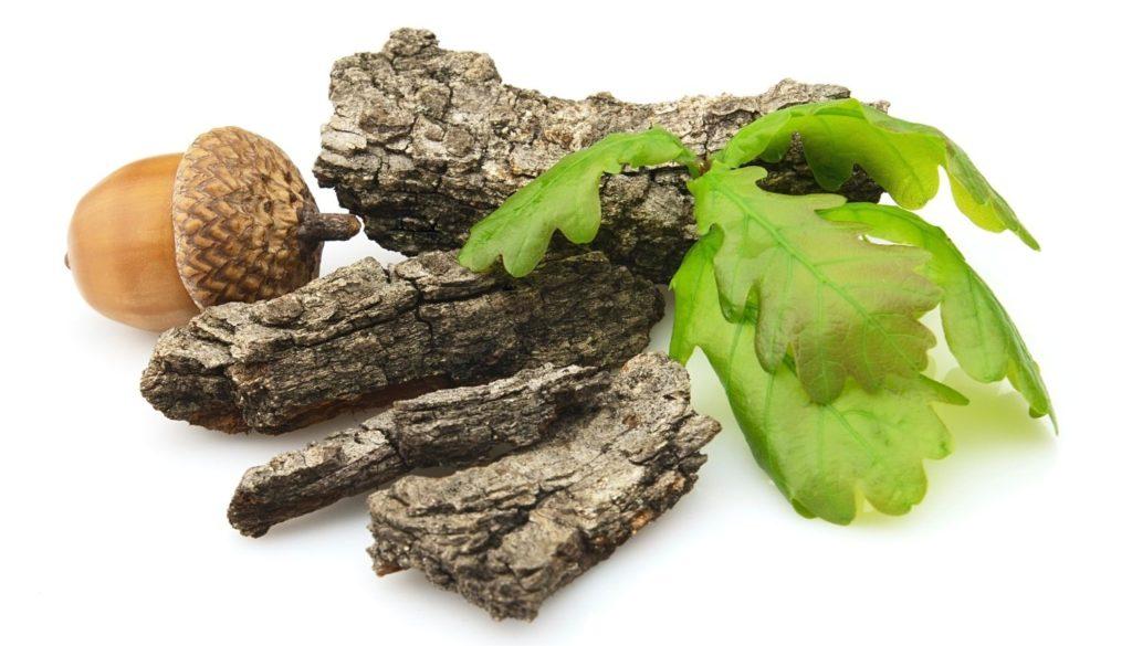 Кора дуба при аденоидах у детей: полезные свойства и рецепты