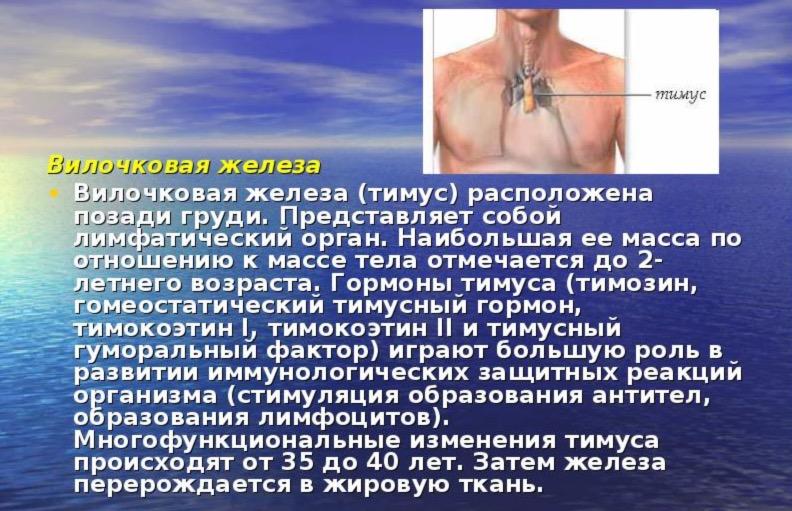стимуляция тимуса