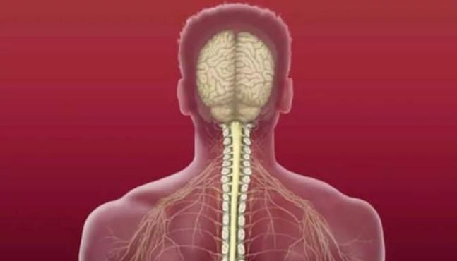 Интересно и не скучно про костный мозг: значение, строение, функции.
