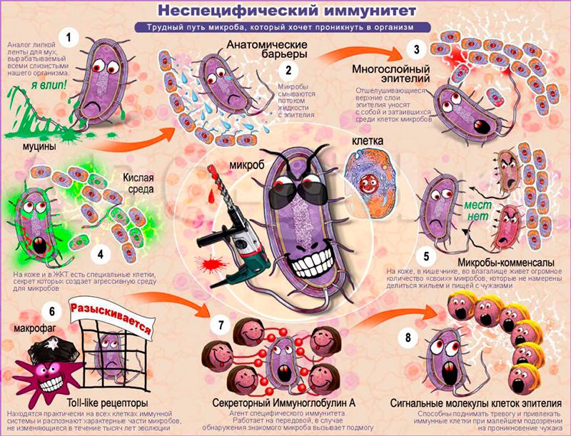 Неспецифический иммунитет: что это такое