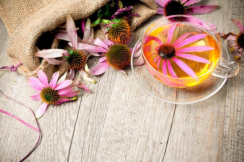 чай с эхинацеей для иммунитета