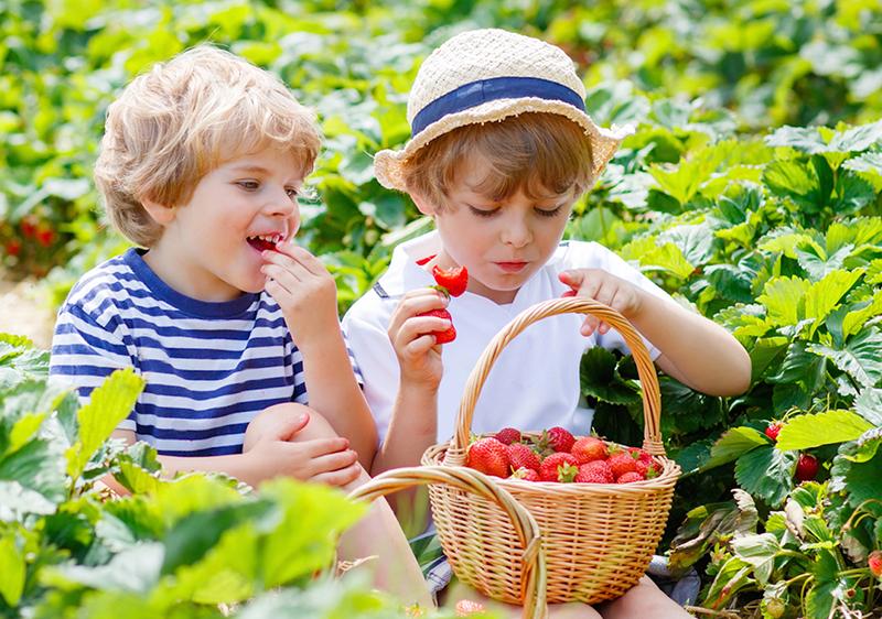 ягоды с куста - лучшее средство для иммунитета