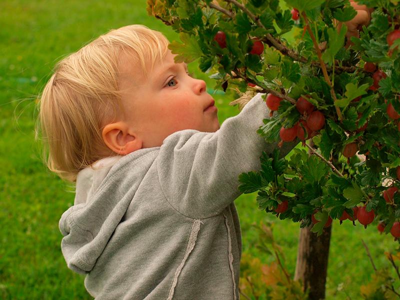 ягоды с куста - народные средства для иммунитета